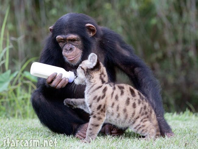 FP_3516547_BARM_Chimp_Puma_EXCL_083109.j
