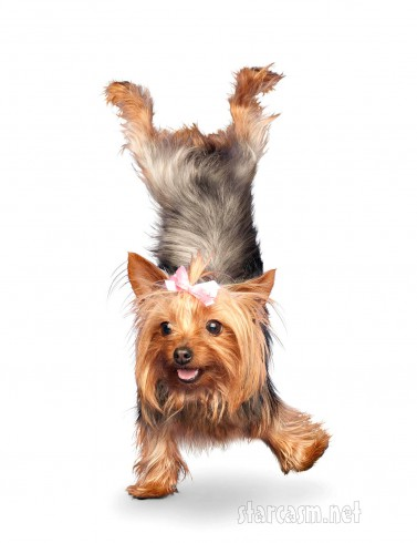 Yoga Dog 11