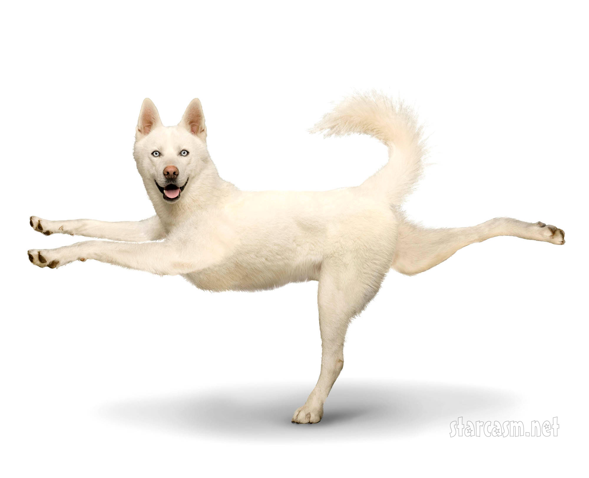 Cute Yoga Dogs Image source
