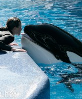 JeanMichel Cousteaus Statement on Captive Orcas amp the