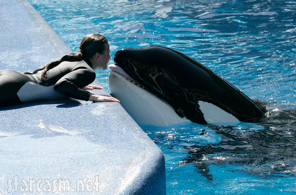 killer whale attacks trainer dawn brancheau
