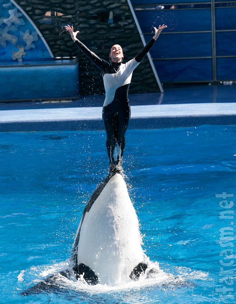 seaworld trainer dawn brancheau killed by killer whale
