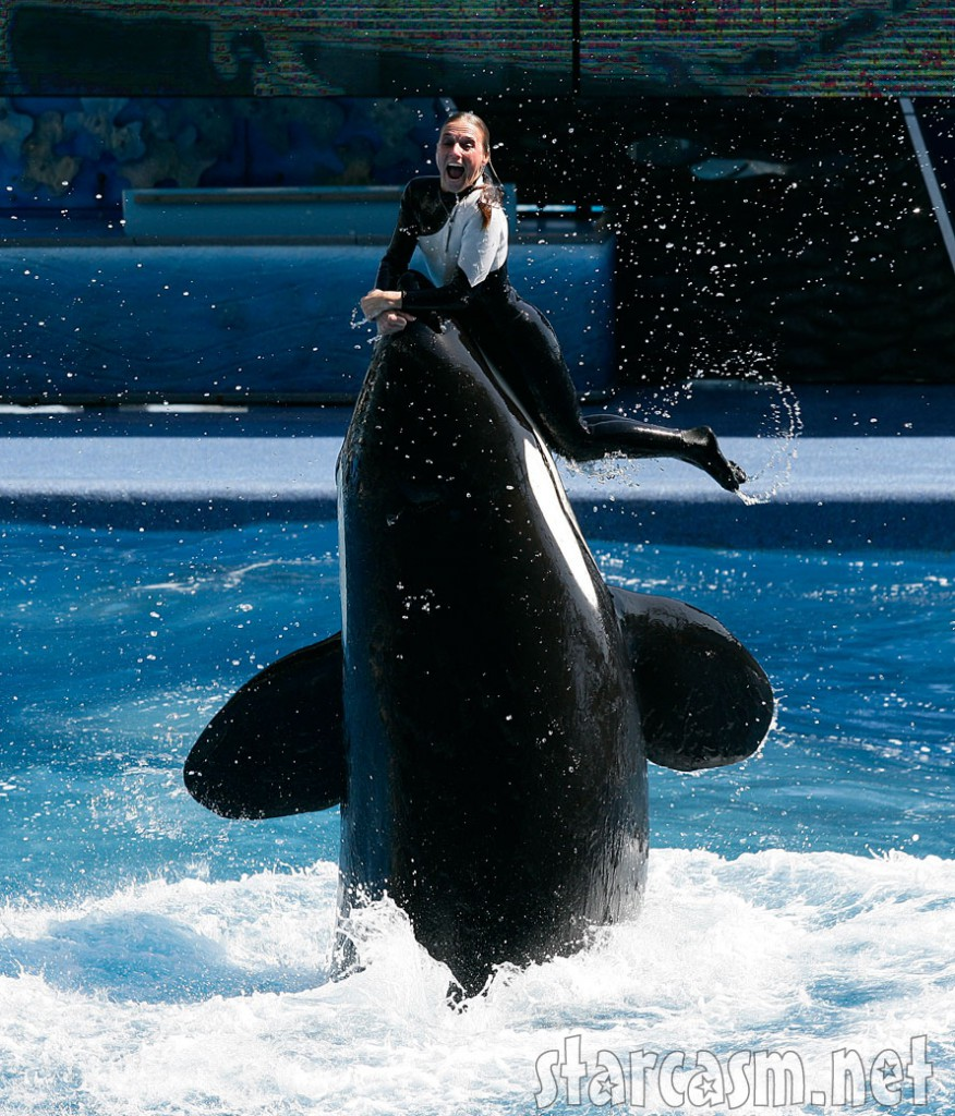 Blackfish film  Wikipedia