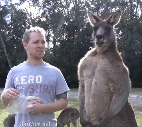 Muscular Kangaroo