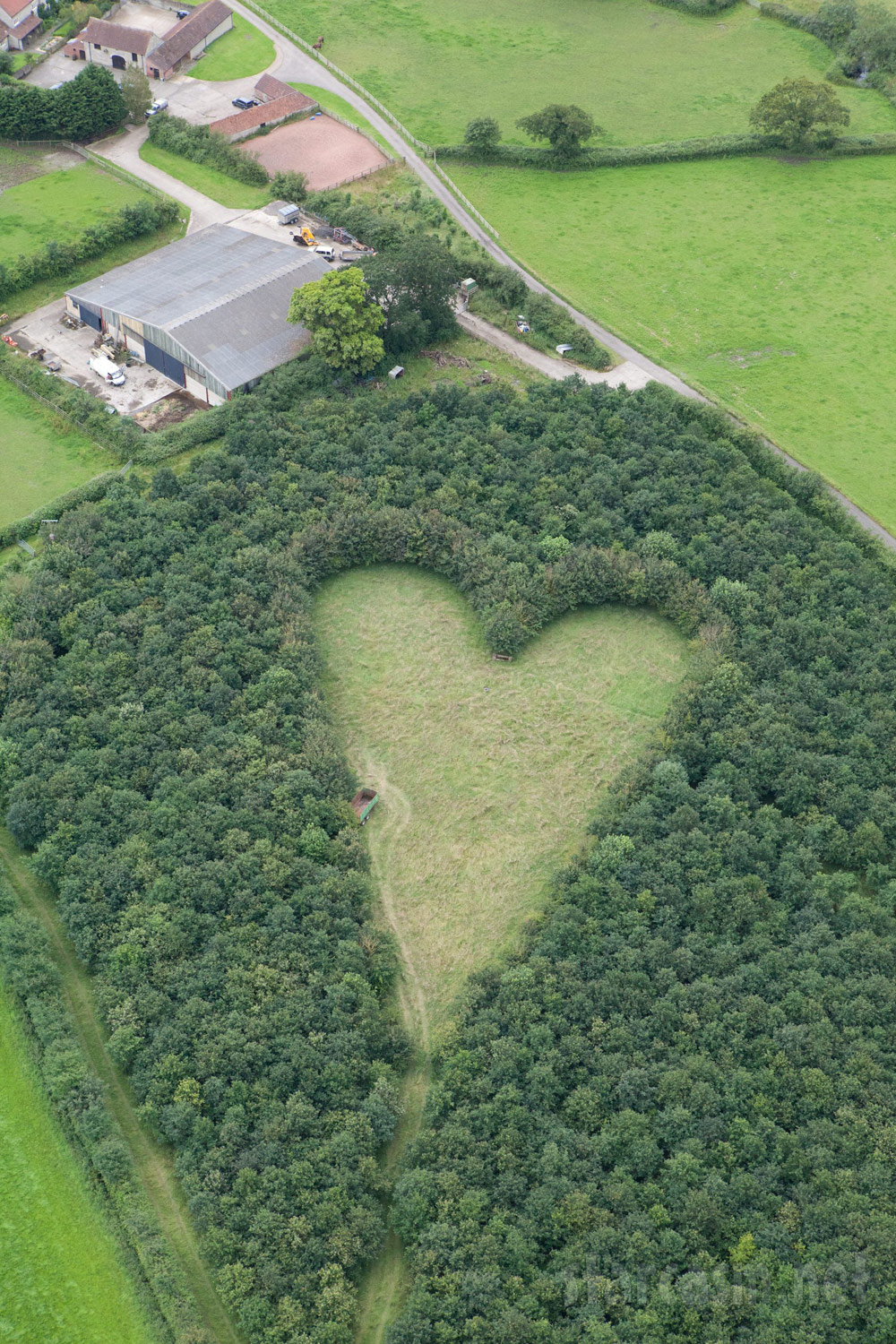 PHOTOS Man plants 6,000 oak trees in outline of heart in memory of ...