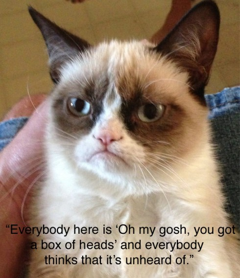 Grumpy Cat as Brian Bell not impressed