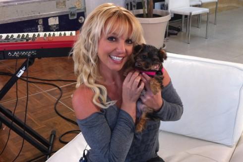 Britney-Spears-Dog-Hannah
