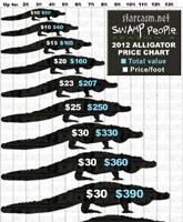 Swamp_People_Season_4_alligator_prices_tn