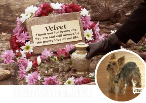 Kenya Moore's dog Velvet