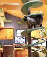 Starbuzz_rescue_cathouse_tn