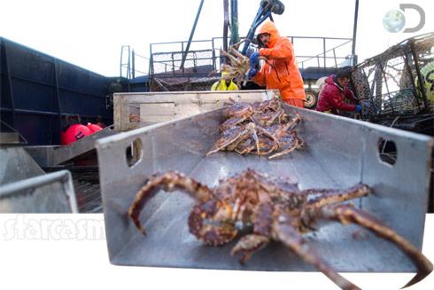 Deadliest Catch crabs