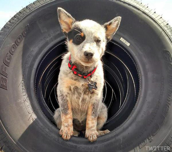 Photos Farmtruck S Puppy Suzy From Street Outlaws