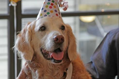 Bretagne Birthday Celebration