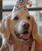 Bretagne Birthday Celebration TN