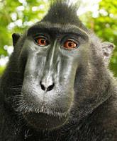 selfie_monkey__tn