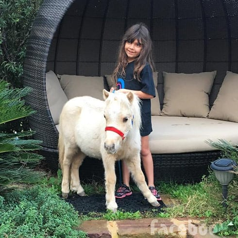 Sophia Abraham miniature horse Starburst