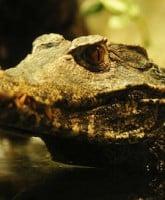 Pastor eaten alive by crocodiles 1