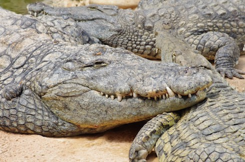 Pastor eaten alive by crocodiles 2