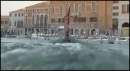 Sharks In Venice fin shot