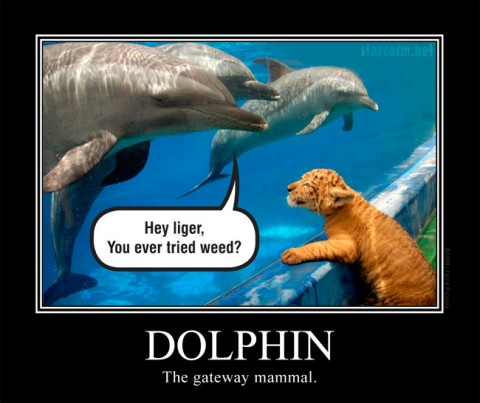 More Dolphin Humor