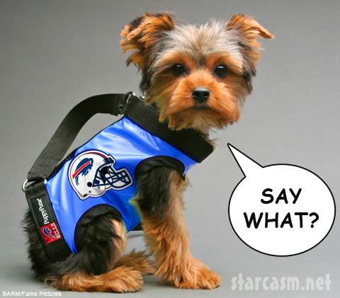 A Buffalo Bills fan hears the news Michael Vick is signing with the team