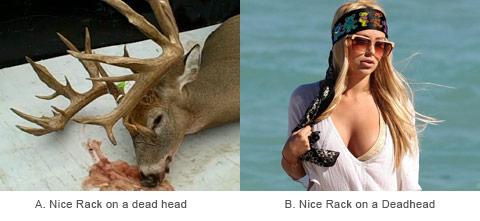 Large rack on a dead head or large rack on a Deadhead? Take the poll!