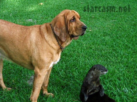 "A dog and an otter - in honor of ""The Day Without Cats Online"" - BARM/Fame Pictures"