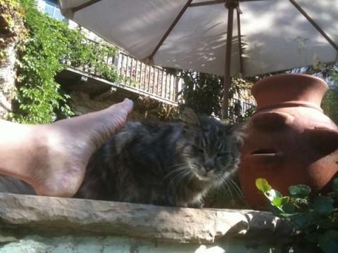 """Cat, terracotta, pot, with Troll foot, under umbrella. Beverly Hills California"