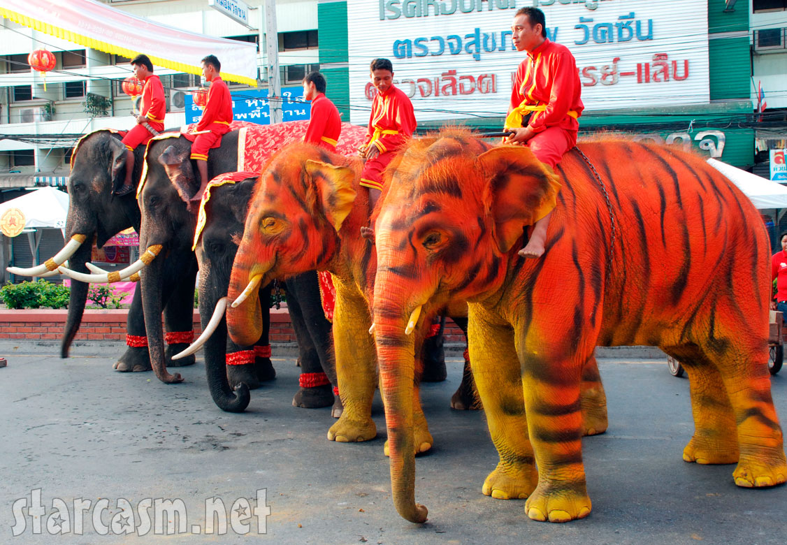 Elephants painted to look like tigers in Taiwan