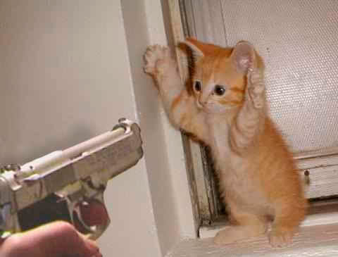Kitten gets held up with a gun