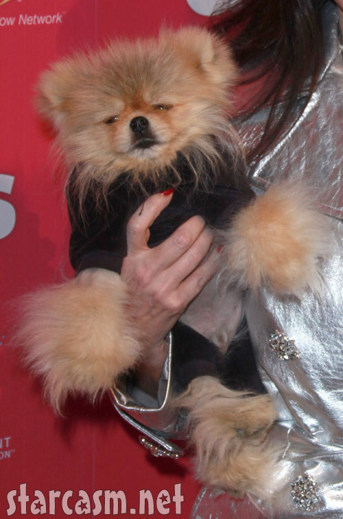 Giggy the Pomeranian from The Real Housewives of Beverly Hills