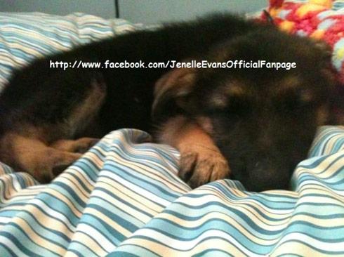 Teen Mom Jenelle Evans new dog a German Shpeherd
