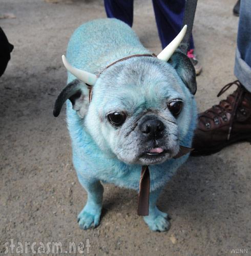 Dog as Babe the Blue Ox 2011 Tompkins Square Park Halloween Dog Parade