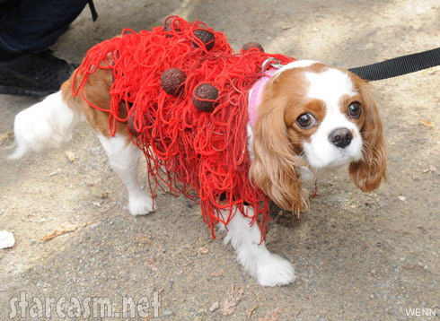 Spaghetti and meatballs dog costume 2011 Tompkins Square Park Halloween Dog Parade