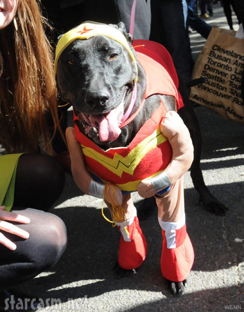 Dog in aWonder Woman costume 2011 Tompkins Square Park Halloween Dog Parade