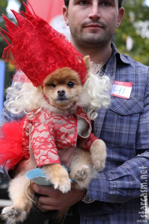 Dog dressed as Lady Gaga at 2011 Tompkins Square Park Halloween Dog Parade