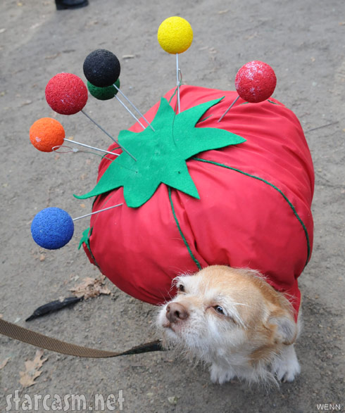Dog in a pin cushion costume 2011 Tompkins Square Park Halloween Dog Parade