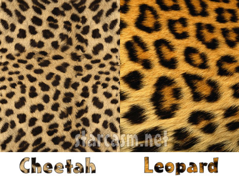 The difference between leopard print and cheetah print