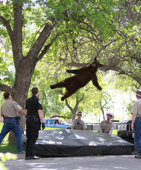 Amazing photo of a bear in mid-air
