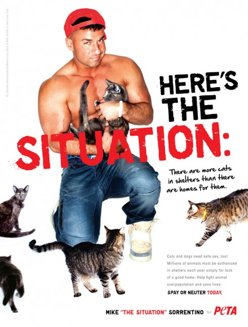 The Situation PETA poster with cats