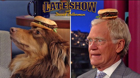Amanda Seyfried's dog Finn Seyfried and David Letterman with hamburgers on their heads