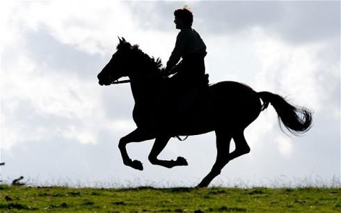 War Horse AHA