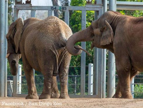 Mila-and-Mary_San-Diego-Zoo