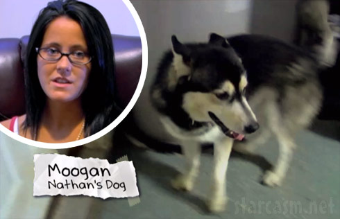 Jenelle Evans and Nathan Griffith's dog Moogan the Husky, who was mistreated on a Teen Mom 2 episode