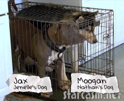 Jenelle Evans' dogs Jax and Moogan in a cage together