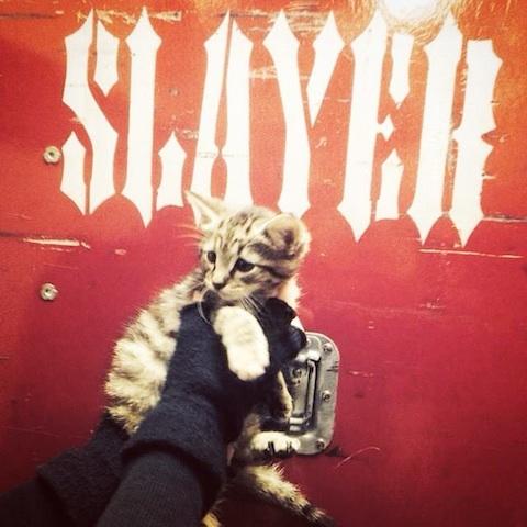 Slayer kitty