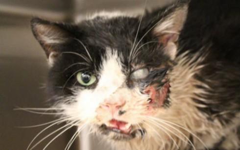 Bart Zombie Cat Alive