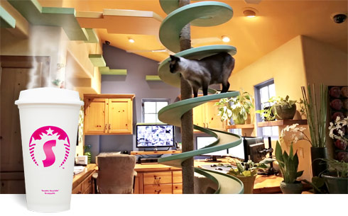 Starbuzz rescue cat house