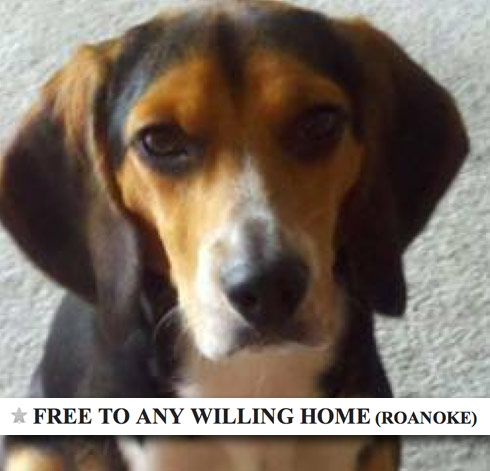 beagle Molly Craigslist ad Roanoke