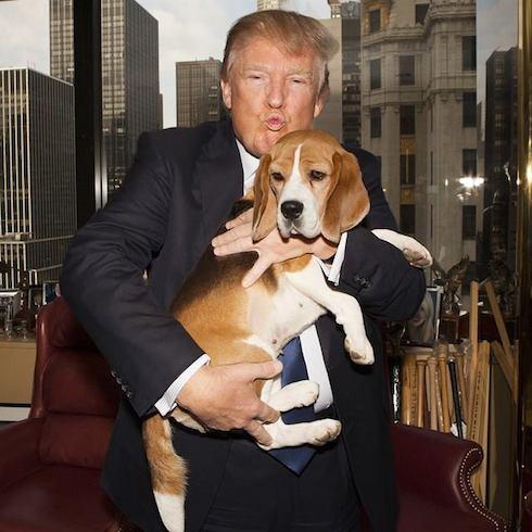 Trump sad dog